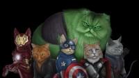 FOTO: cat_heroes6
