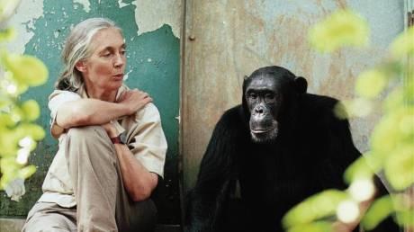 FOTO: Jane Goodall