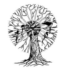 OBR: Straky na vrbě
