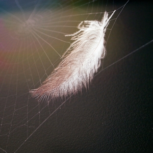 OBR: White feather
